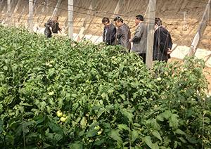 万博官方manbetx下载花餐饮绿色蔬菜基地